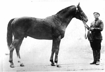 Bujan-1916