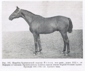 Islam-budj-1932.jpg