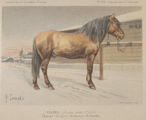 chevaux-wiatka-1
