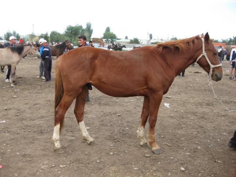 Pferdemarkt-1